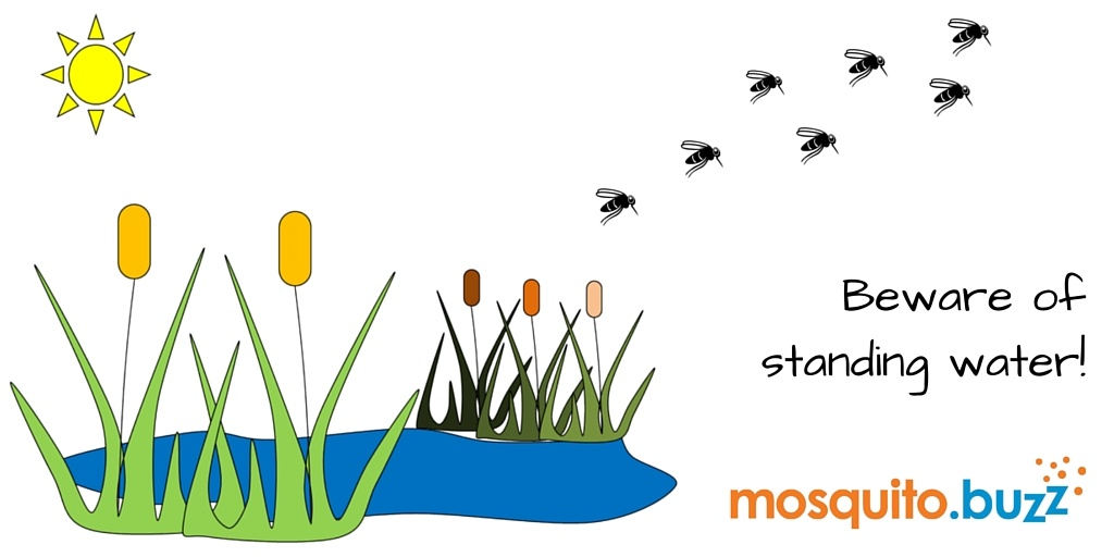 Mosquitoes breed in standing water.