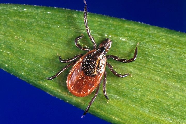 Many provinces in Canada are risk areas for Lyme disease.
