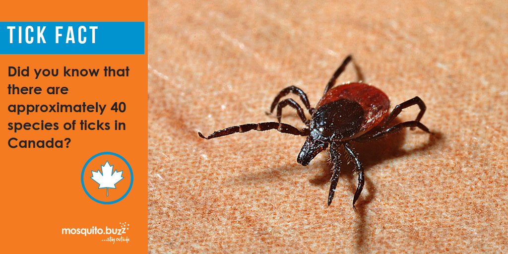 Ticks look for hosts before winter.