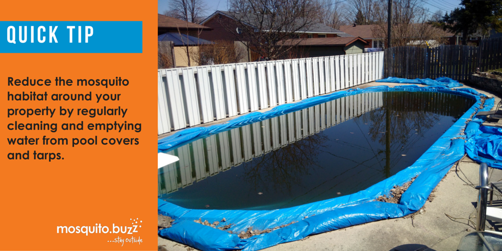 Eliminate standing water on your property.