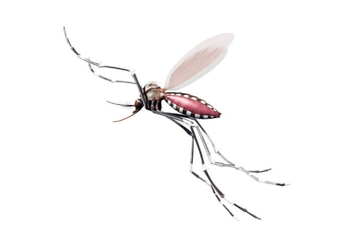Learn About The Mosquito Life Cycle - Featured Image