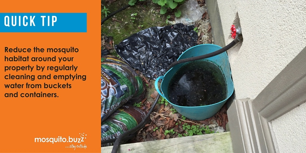 Eliminating and removing possible breeding habitats for mosquitoes can greatly reduce populations.