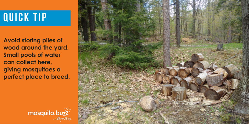 Mosquitoes like the dark humidity of wood piles