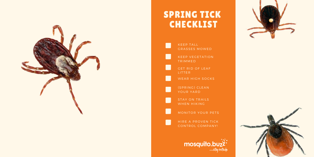 The adult stage is the last stage of a ticks' life.