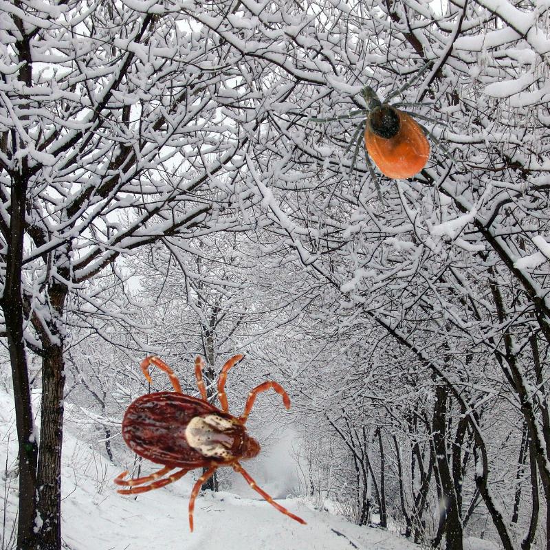 Ticks do not die in winter.