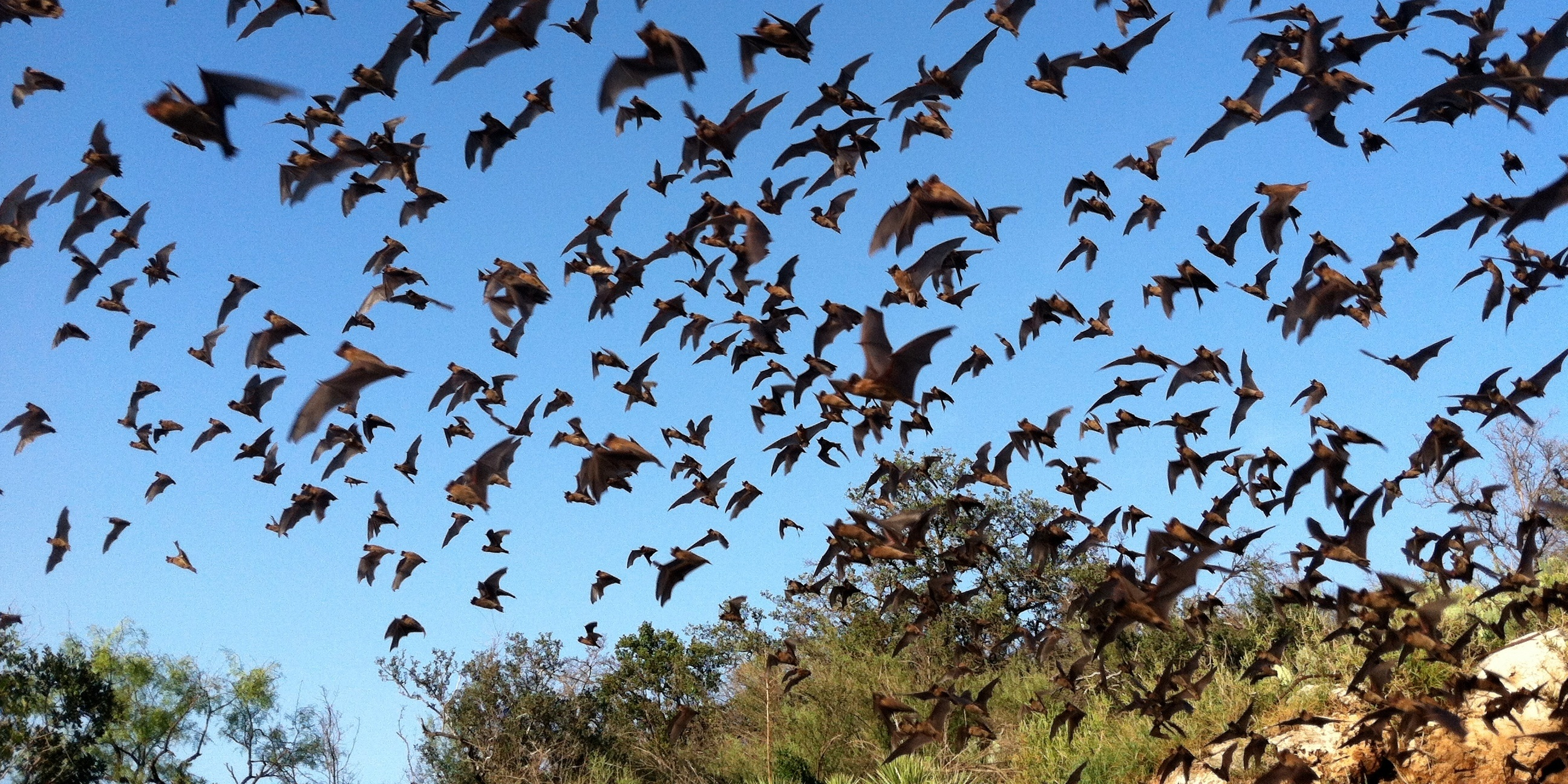 bats-solution-mosquitoes.jpg
