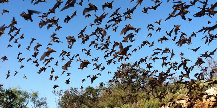 bats-solution-mosquitoes.jpg