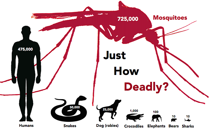 deadliest-animals-mosquito.png