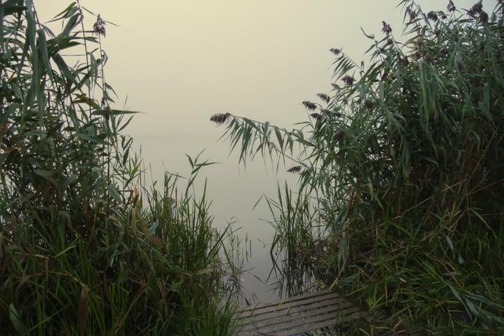 fog-river.jpg