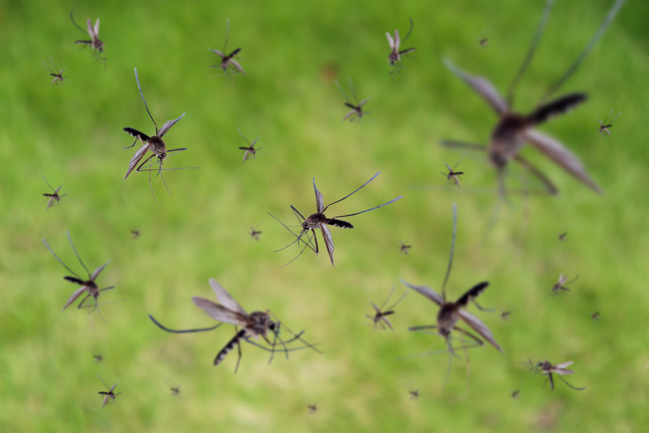 Mosquito prevention on your property is the best protection.