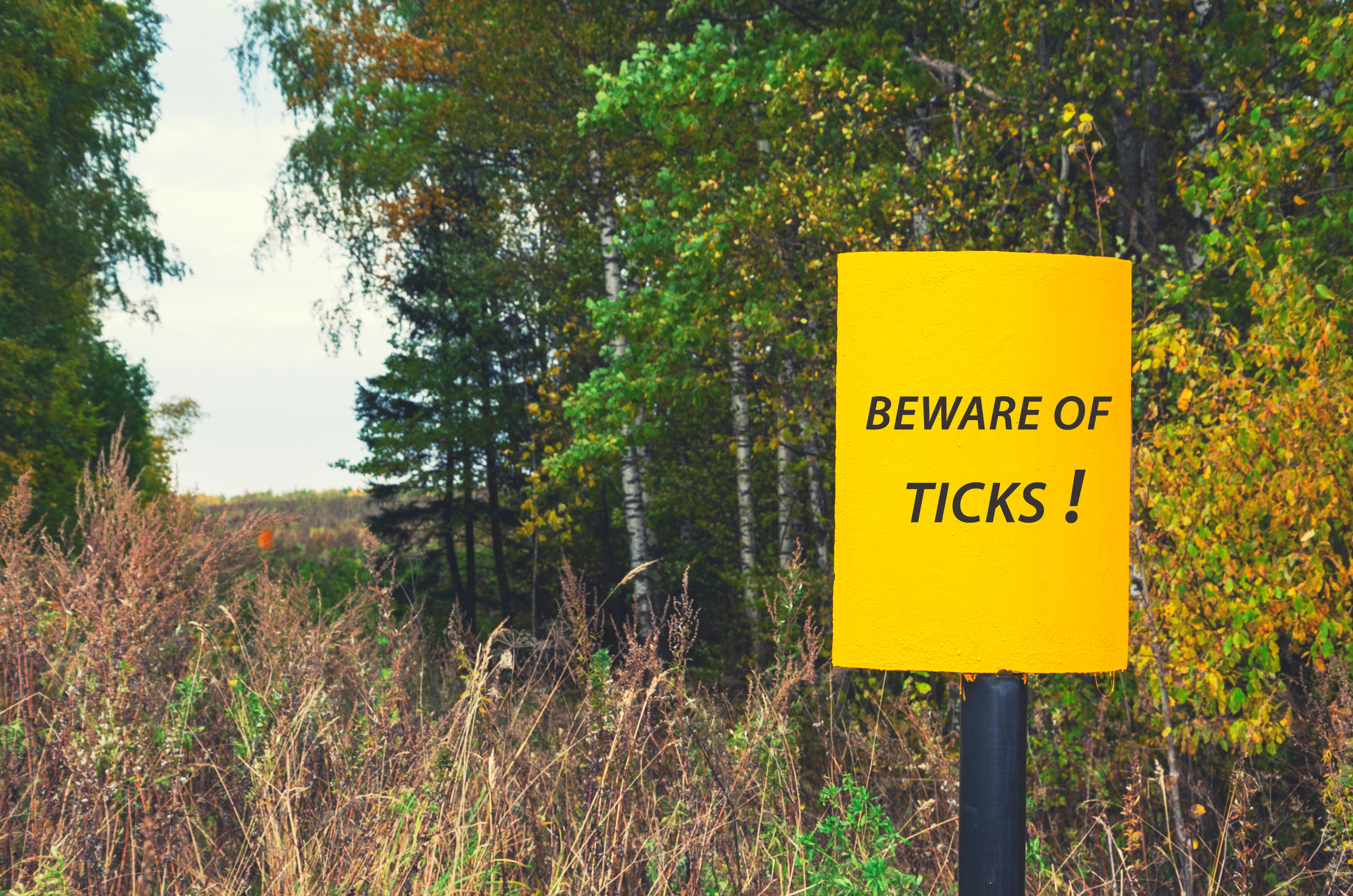 Ticks remain active as long as the weather is above freezing.