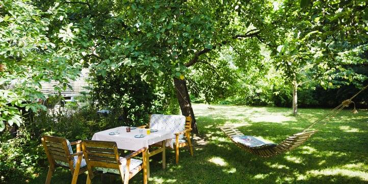 mosquito-hiding-place-backyard.jpg