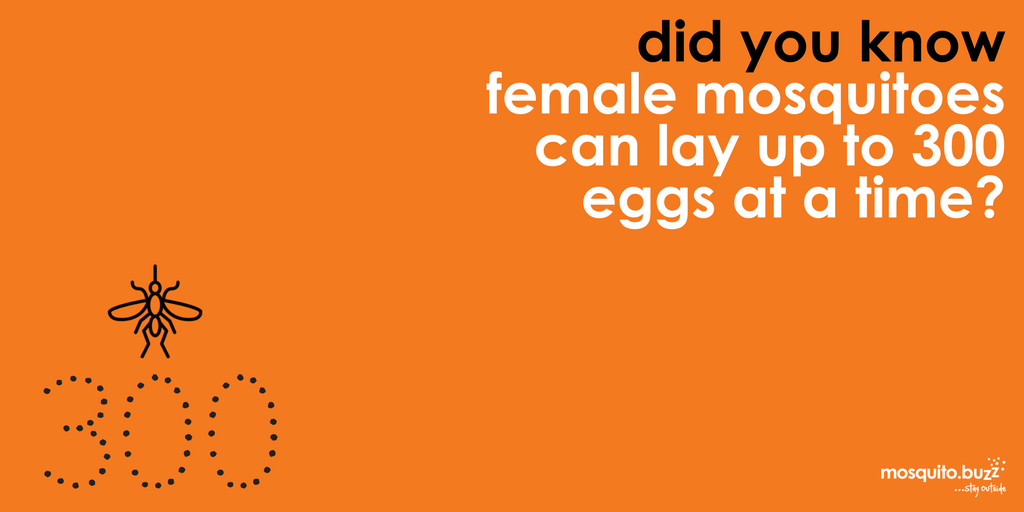 Female mosquitoes can lay up to 300 eggs.