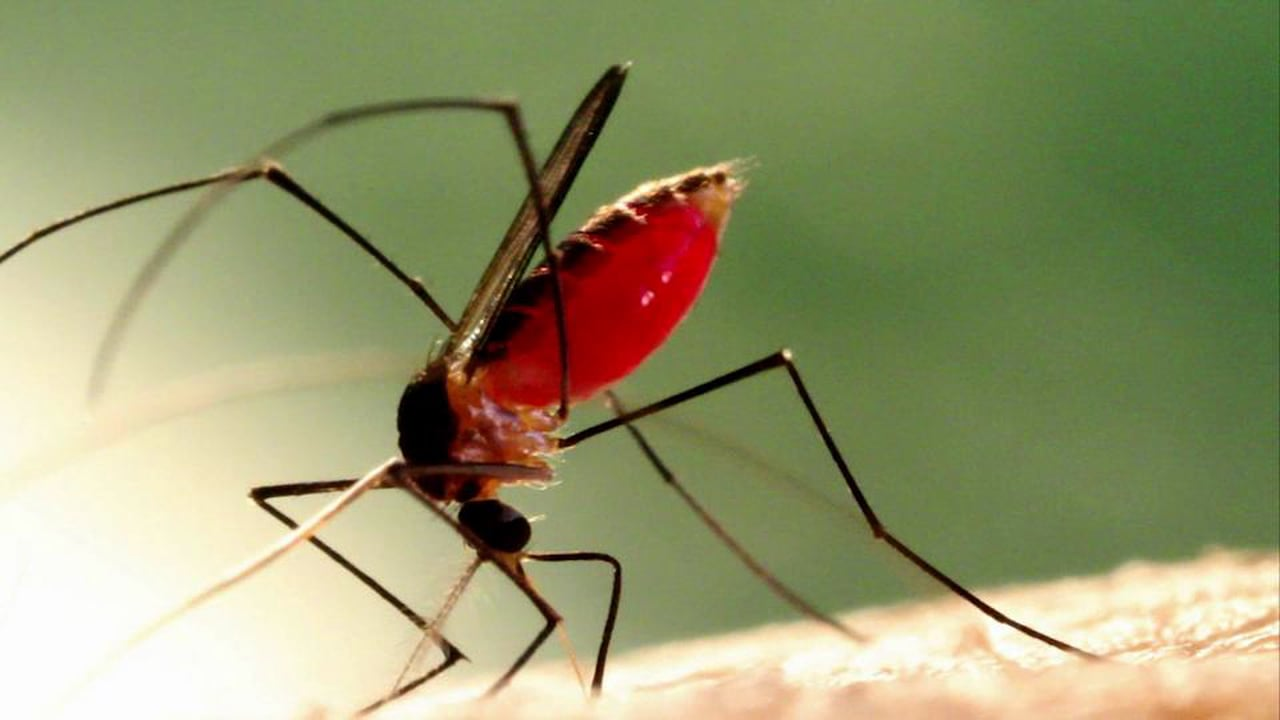 mosquito_life_cycle_-_mosquito_buzz-1.jpg