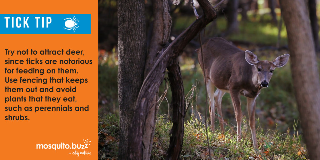 Adults prefer to feed on large mammals, such as white-tailed deer, pets or humans.