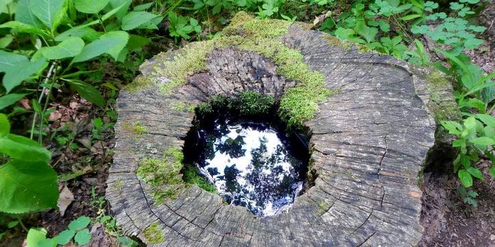 tree-stump-mosquito-breeding.jpg