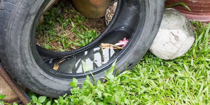 where-do-mosquitoes-hide-tires.jpg