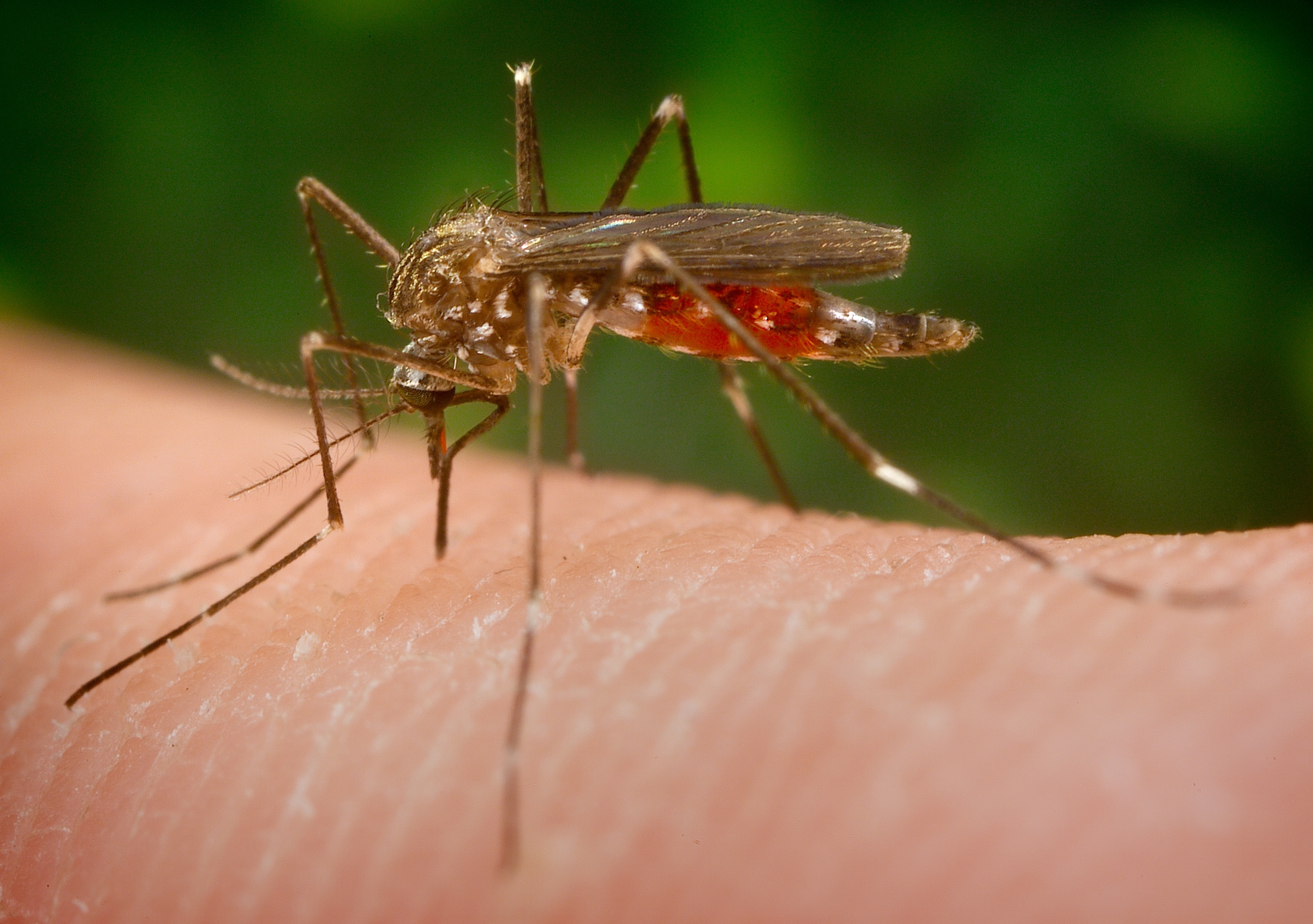 Learn About West Nile Virus - Featured Image