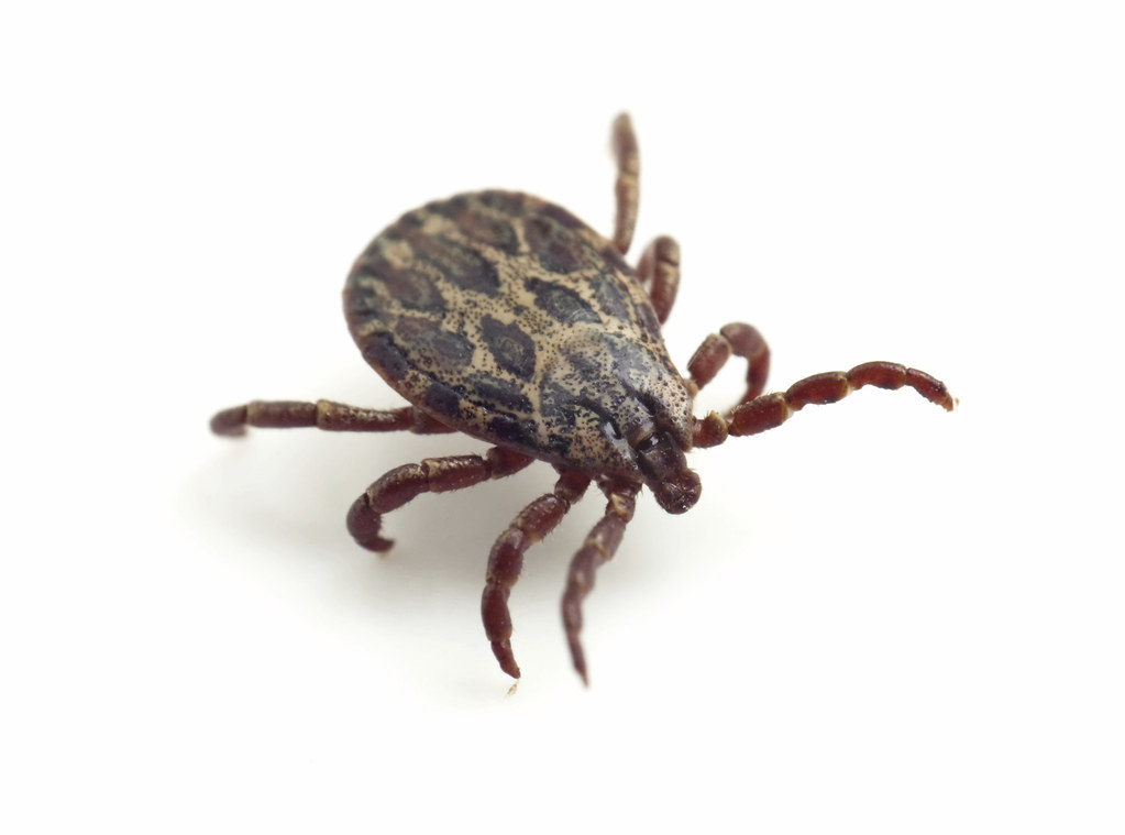 How To Get Rid Of Ticks - Featured Image