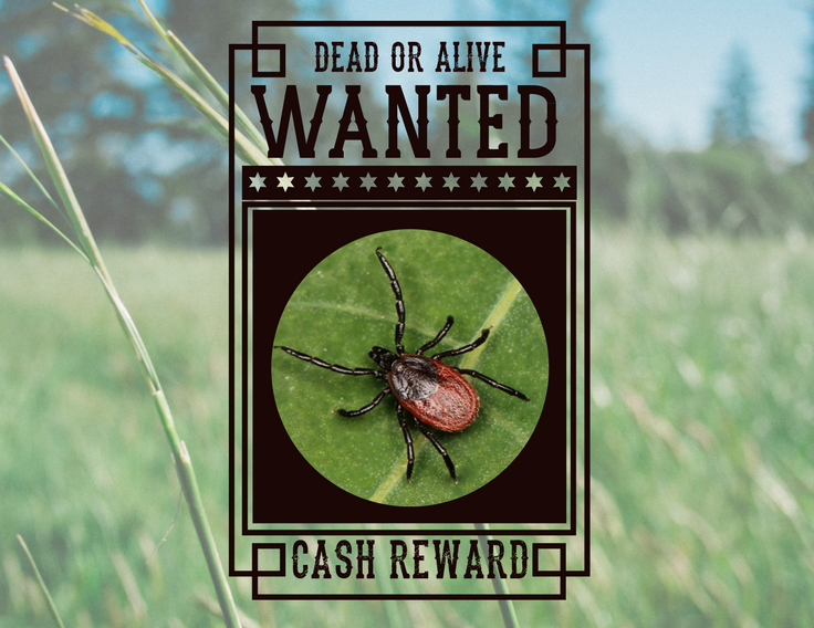 Tick Talk: Our Country's Most Wanted Ticks - Featured Image