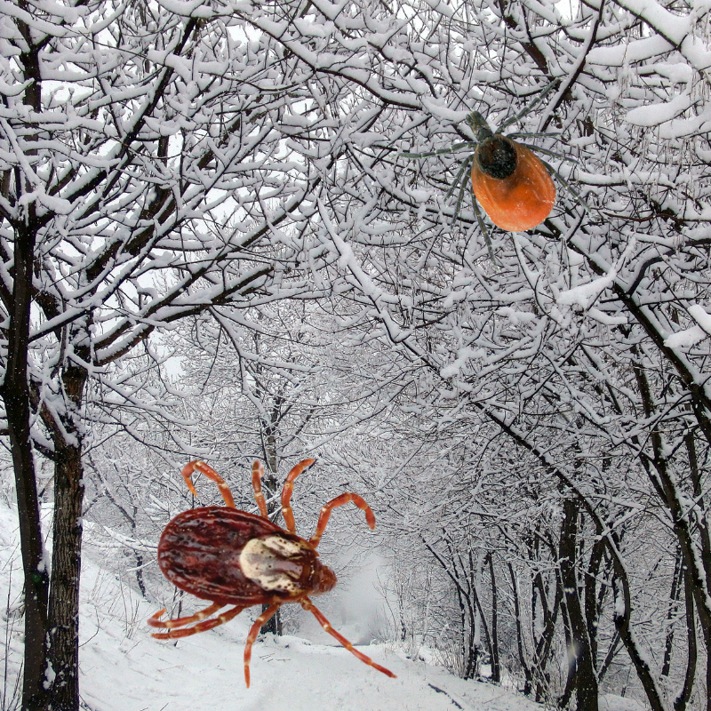 What Happens To Ticks In Winter? - Featured Image