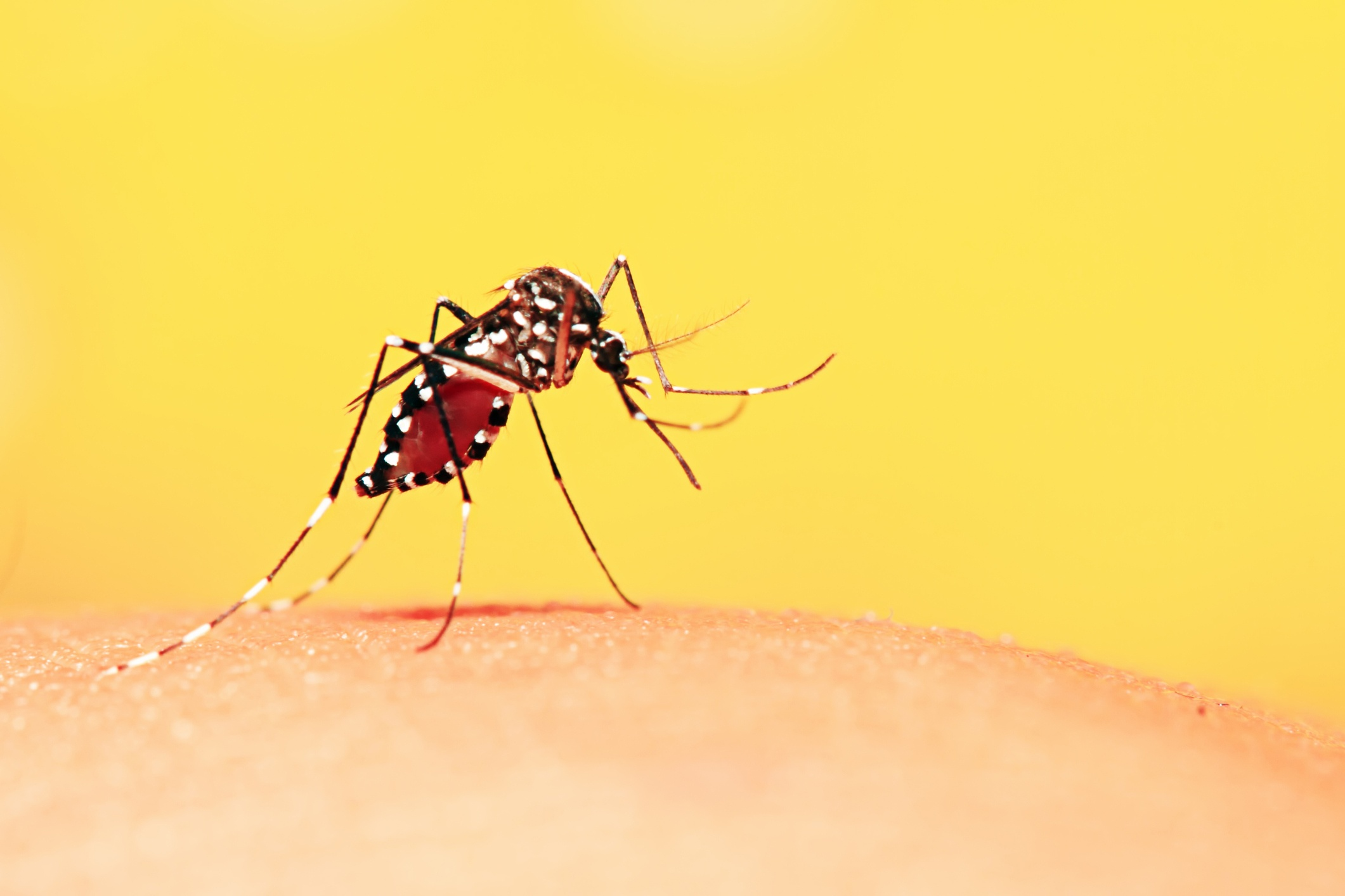 8 Common Mosquito Myths - Featured Image