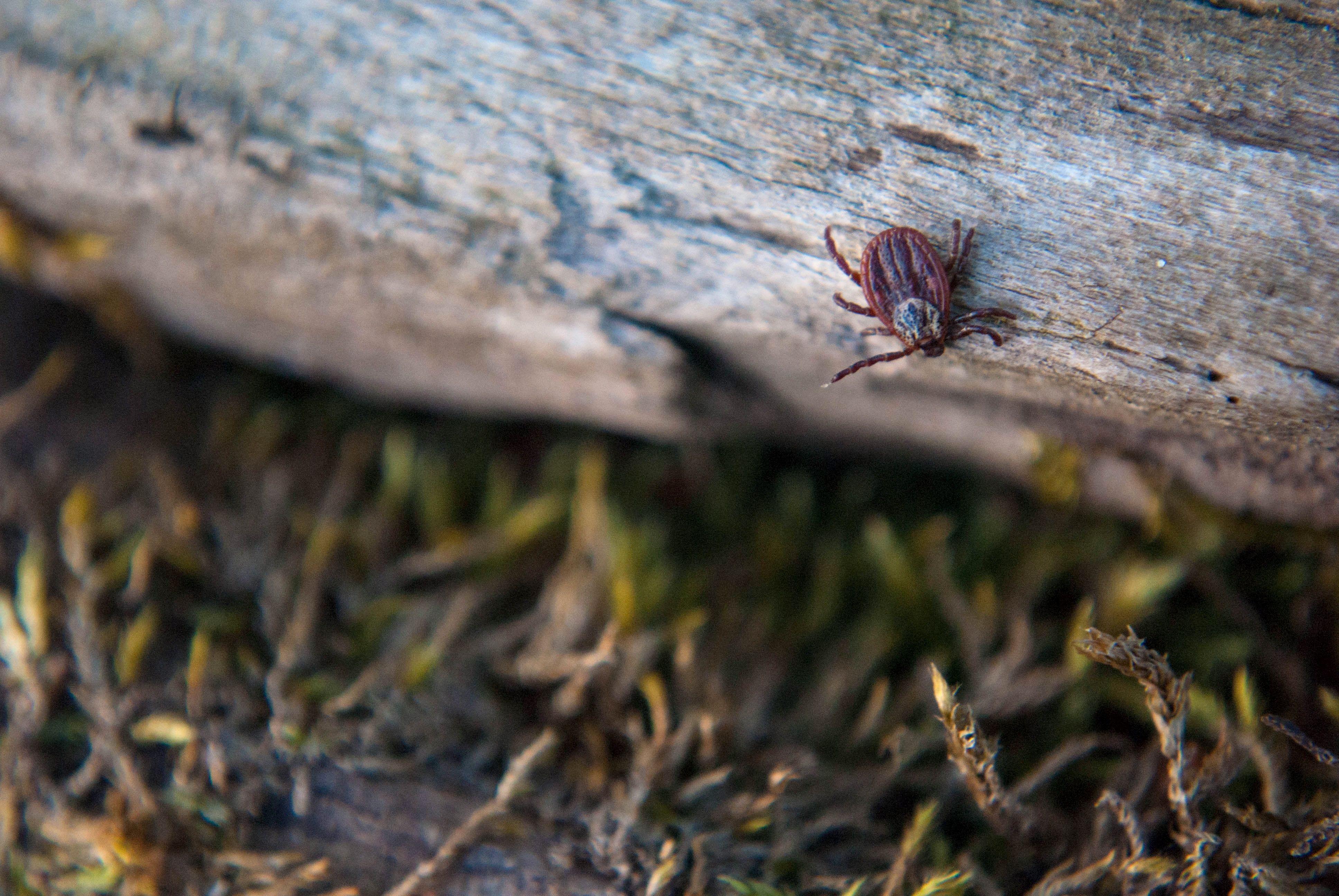 How Ticks Hunt - Featured Image